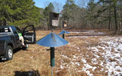 Blue Bird Nest Box March Update