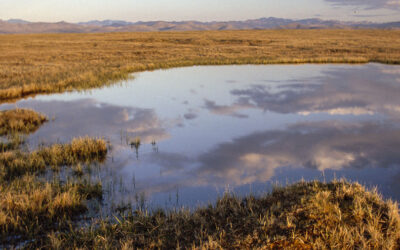 Bird Watching Volunteers Help Climate Watch