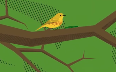 Join the Flock at Audubon For Kids!