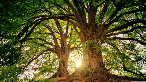 """Another """"Love a Tree"""" Reminder"""
